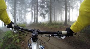 cycling forest